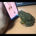 Sapo brincando com um Iphone