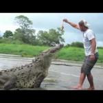 Vídeo impactante: Homem e animais, segure a respiração e assista