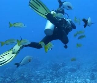baleiamergulho