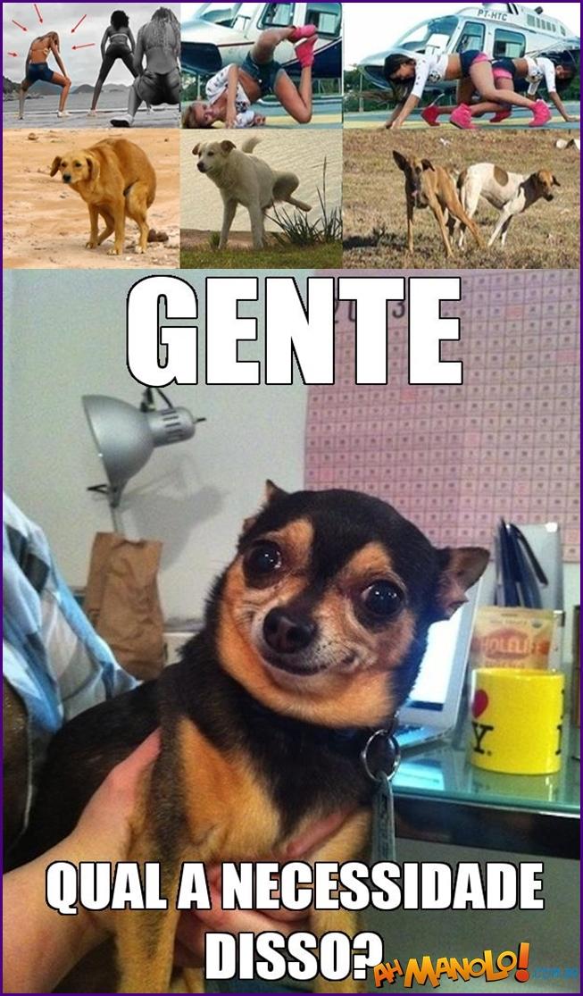 dog-quadradinho