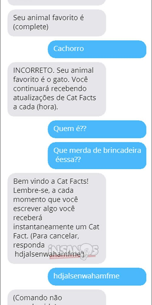 fatos_gatos