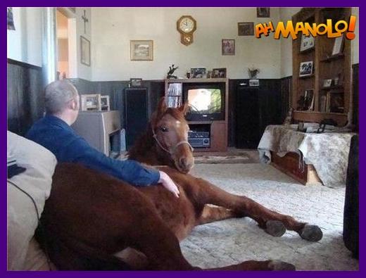 Animal de estimação