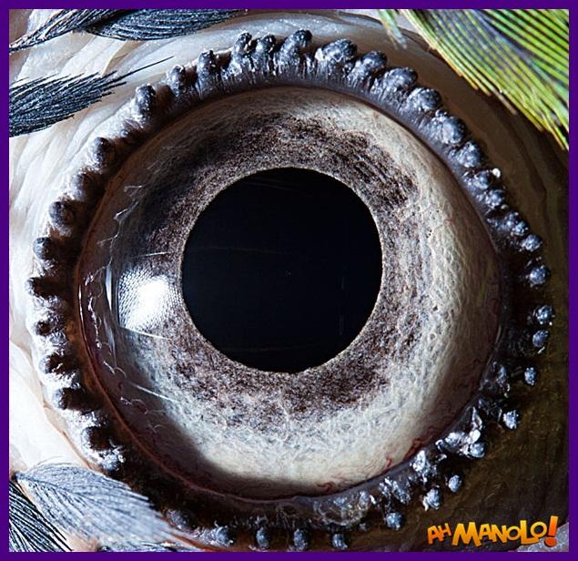 olhos de animais