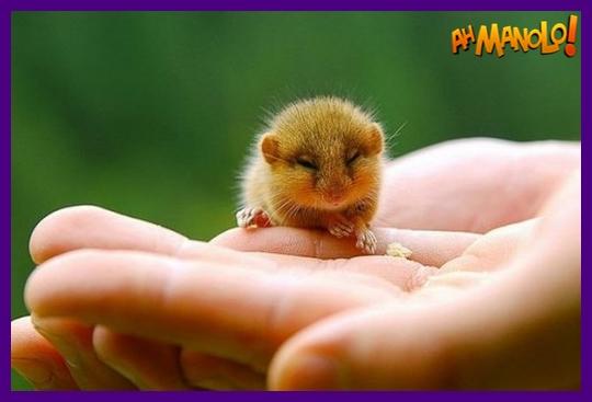 Os 10 animais bebês mais bonitos do mundo!